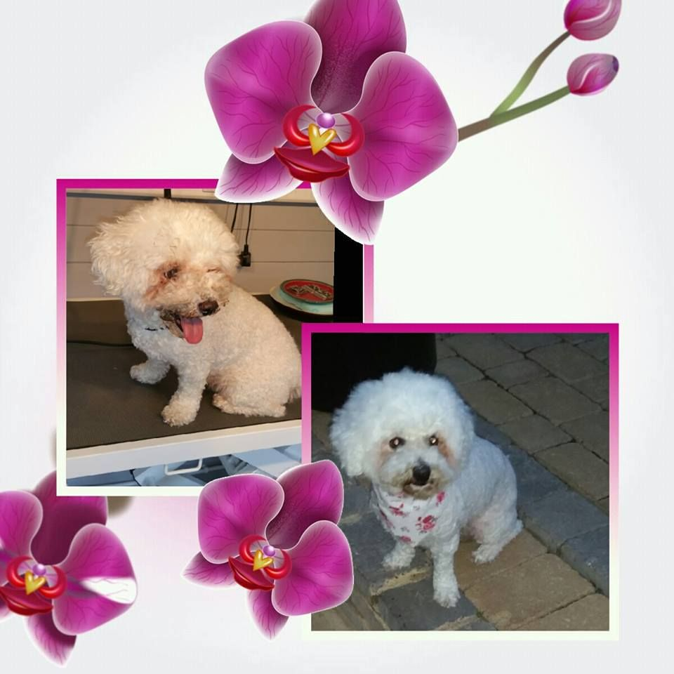 image of groomed dog with flower border.