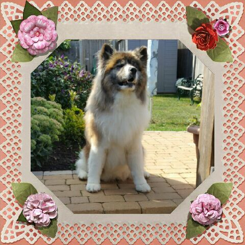 Image of groomed dog in a flowered boarder
